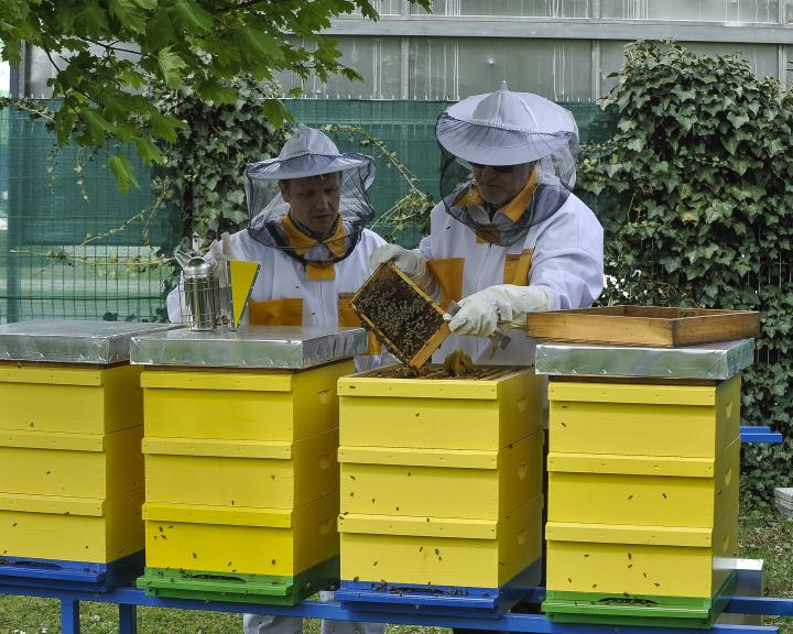 Beehive at the Green Garden of Atlantis Water Park in BTC City